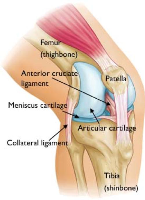 Knee Pain: Testing Western. Treating Eastern. | Pacific College