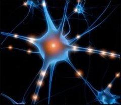 Neurohormonal Effects of Massage Therapy