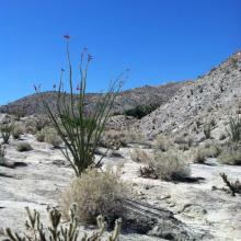 Special Excerpt From the Desert