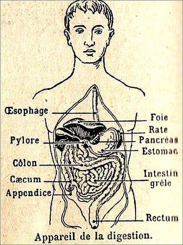 Digestion Chart