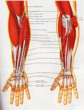 Massage Therapy for Tendonitis