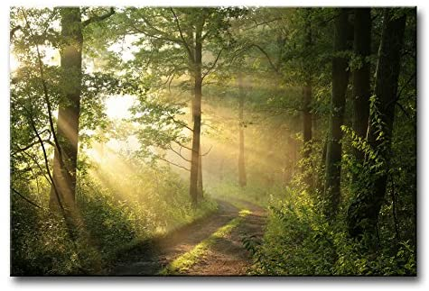 A photo of golden light shining through a tranquil forest